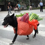 017 150x150 - Ein behinderter Hund und eine MS`lerin