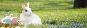 """easter bunny 3201433 1280 300x99 - Woher kommt der Brauch des """"OSTER-EIs"""" und des """"OSTER-HASENs""""?"""