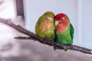 parrot 1245874 1280 300x200 - MYTHEN bei Sexualität und MS