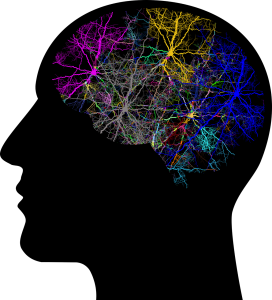 cranium 3244118 1280 272x300 - Was ist eine Spastik bei Multipler Sklerose?