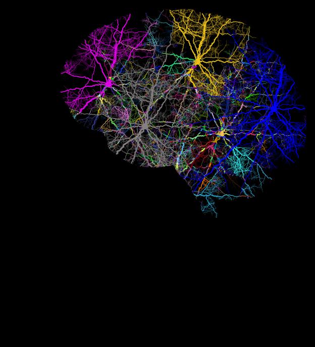 cranium 3244118 1280 624x688 - Was ist eine Spastik bei Multipler Sklerose?