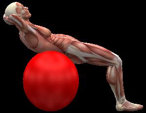 exercise ball 2277451 1280 300x233 - Was ist Muskelzucken bei Multipler Sklerose?