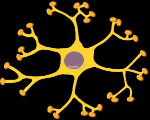 nerve cell 145909 1280 300x241 - Was versteht man unter der sekundär progredienten MS?