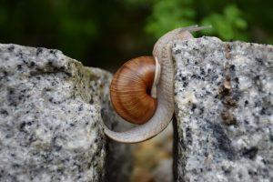 snail 1447233 1280 300x200 - Wo sind meine Grenzen? Wie viel halte ich noch aus? Und eine (überraschende) Erkenntnis!